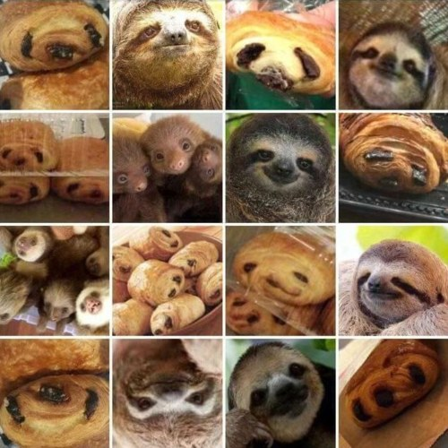 3234DD7000000578-3493120-The_meme_featuring_sloths_looking_surprisingly_similar_to_chocol-m-1_1458042999397